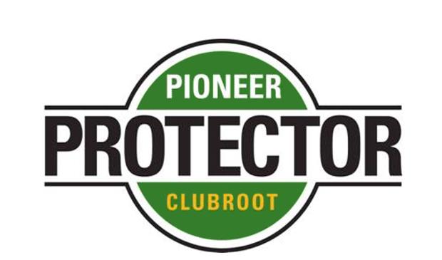 pioneer-clubroot